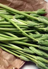 bioasparagus