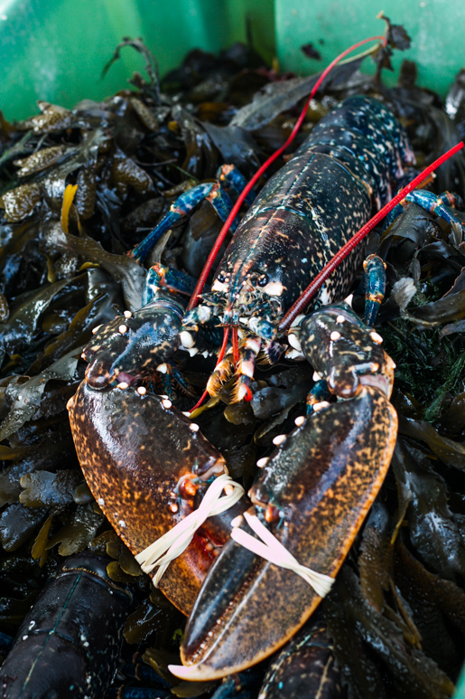Midleton Farmers market lobster