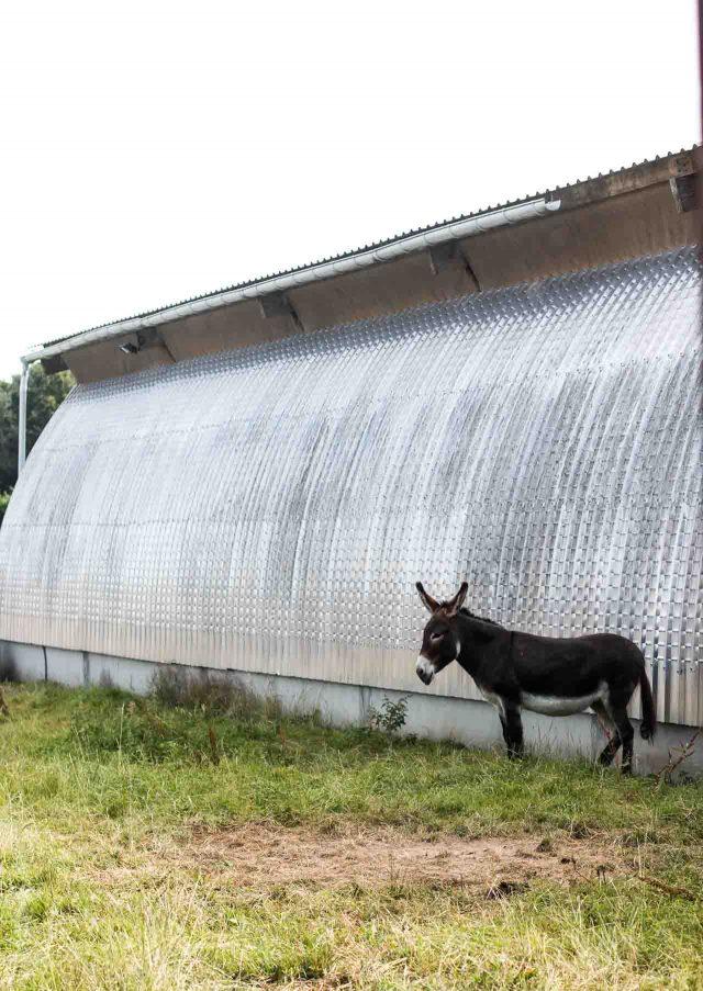 La Ferme de Viltain ass donkey