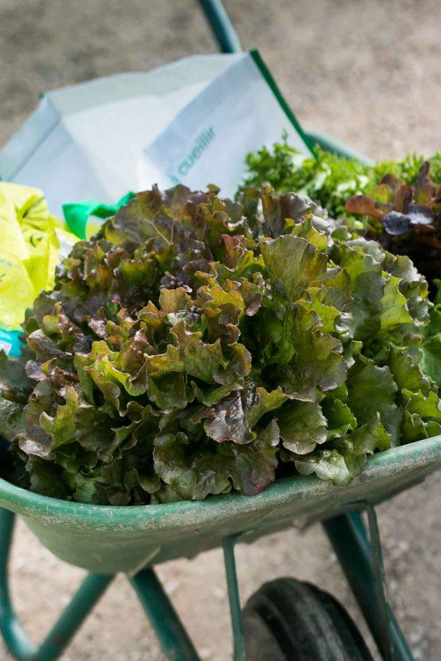 La Ferme de Viltain lettuce