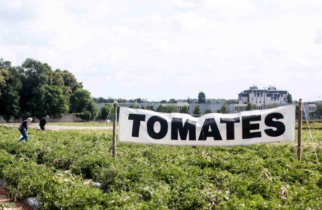 La Ferme de Viltain tomato picking